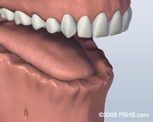 Bottom Teeth graphic